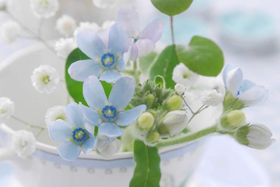 かわいいお花のプレゼント