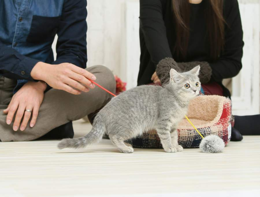 猫と遊ぶ男女