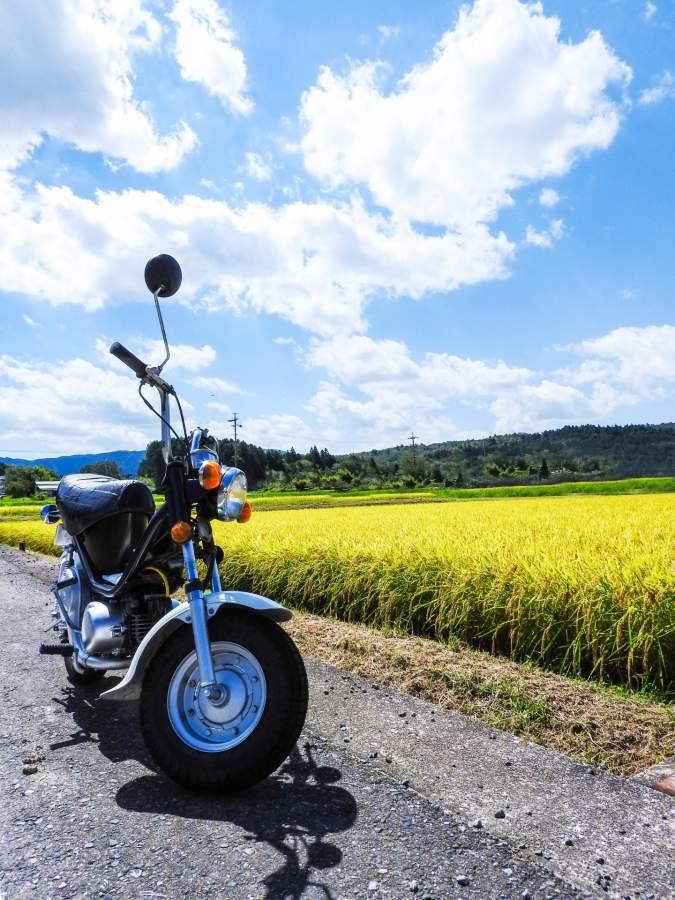 稲とバイク